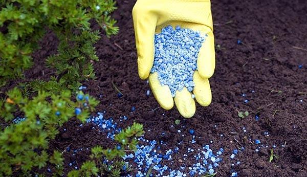 Минеральные удобрения, совершенно необходимы для вашего урожая